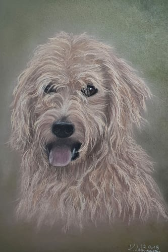Hundeportrait Pastell 20 x 30 cm  130€